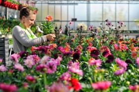 HORTICULURE;NURSERY;PEPINIERE;PLANTE;VEGETABLE;FLEUR;FLOWER