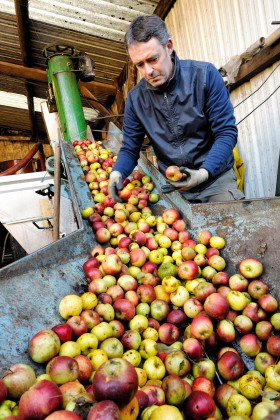 APPLE;ORCHARD;POMME;PRODUCER;PRODUCTEUR;VERGER;PRESSOIR;PRESS;EXTRACTION;JUS;JUICE