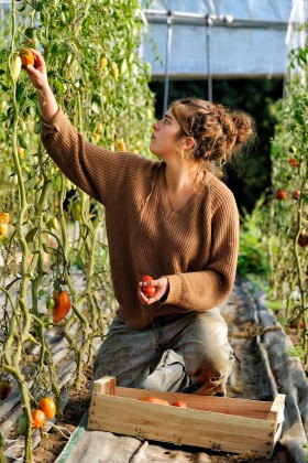 GREENHOUSE;LEGUME;PRODUCER;PRODUCTEUR;SERRE;TOMATE;TOMATO;VEGETABLE;CUEILETTE;PICKING