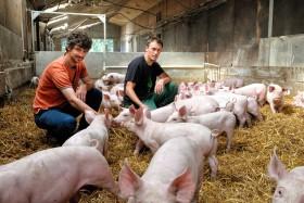 BREEDING;COCHON;ELEVAGE;FARMING;PIG;PORC;PORK;PIGLET
