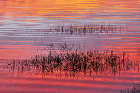 reflet;reflection;lumiere;light;lever de soleil;sunrise;rouge;red;orange;mauve;herbe;grass